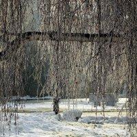 Берёзовые сени :: Виктор Четошников