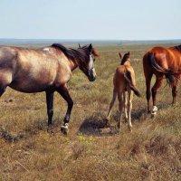 Степные лошадки :: Ирина Соловьева