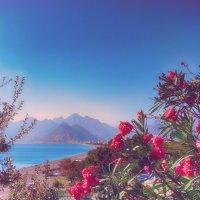 ностальгия по Средиземке :: Натали Акшинцева