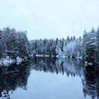 Река Шуя. :: Андрей Скорняков