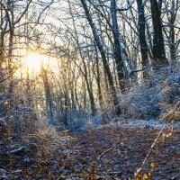 Когда солнце входит в лес.. :: Юрий Стародубцев