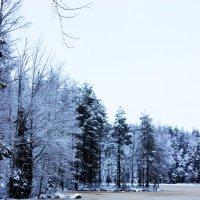 Лёд с железом. :: Андрей Скорняков