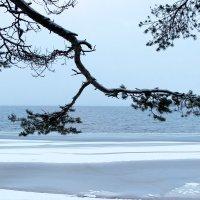 Озеро Сямозеро. :: Андрей Скорняков