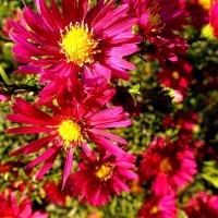 октябрьские цветики :: Александр Прокудин