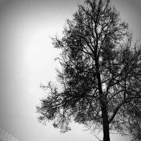 Одинокое дерево в Кремле. :: Fededuard Винтанюк