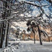 Под снегом. :: Василий Ярославцев