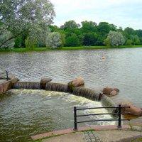 В Несвижском парке.... :: Татьяна Шестакович