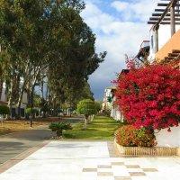 Цветение бугенвиллии на одной из улиц в Лас-Америкасе. :: Лия ☼