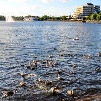 Набережная бухты залива :: Светлана