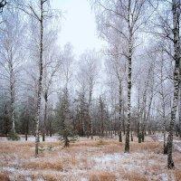 Зимний лес. :: Андрий Майковский