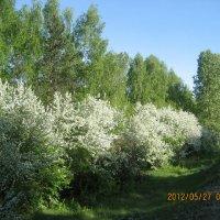 Весна :: ОКСАНА ЮРЬЕВНА ШВЕЦ