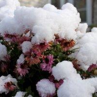 Первый снег :: Ирина Пластинина