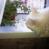 Как прекрасно пахнет этот нежный цветок :: Владимир Ростовский