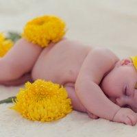 спящий цветочек :: Мария Корнилова
