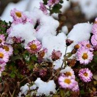 Первый снег :: Мария Климова