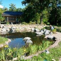 Японский уголок ботанического сада .   Пруд с золотыми рыбками. :: Виктор Елисеев