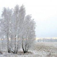 Белая зима. :: nadyasilyuk Вознюк