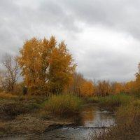 Золотая осень :: Dr. Olver  ( ОлегЪ )