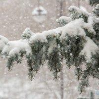 Зима) :: Дмитрий Сахнов