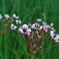 Цветы у озера... :: Александра Архипова