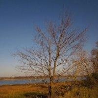 Древо у реки :: Павел Зюзин