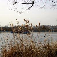 Поздняя осень :: Нина Бутко