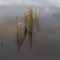 Одинокие былинки :: Valeriy Piterskiy
