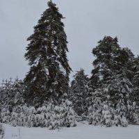 Зимний лес :: Мария Букина