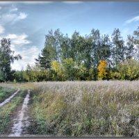 летние дороги.  вспоминая прекрасное... :: Юрий Ефимов
