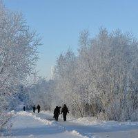 зимняя заснеженность :: Михаил Плецкий