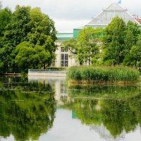 отражение лета... :: Марина Харченкова