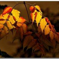 Осенью.... :: Leonid Korenfeld