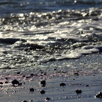 Черное море :: Tasha