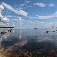 В мангровой бухте :: Михаил Бобков