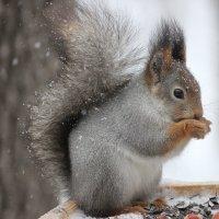 Снежный день :: Ната Волга