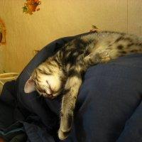 Я и так умею спать...) :: Дмитрий