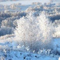 Снежные просторы. :: nadyasilyuk Вознюк