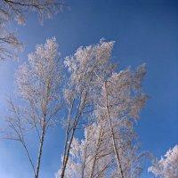 Зимы волшебные мгновения :: Татьяна Ким