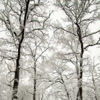 Зимняя сказка)) :: Cassiopeia W