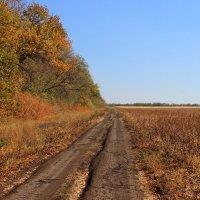 ☼-Большая дорога, прямая дорога/ Простора немало взяла ты у Бога... :: Владимир Суязов