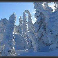 Снежные великаны :: Милешкин Владимир Алексеевич