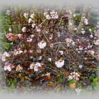 Весна в ....декабре :: Galina Dzubina