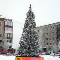 Принарядилась елочка дворовая к празднику :: Наталья Пендюк Пендюк
