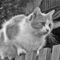 Чей-то котик :: Фотогруппа Весна.