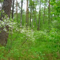 Весенний лес. :: Александр Атаулин