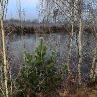 Ещё болеет осенью река... :: Лесо-Вед (Баранов)