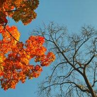 Осень 15 :: Цветков Виктор Васильевич