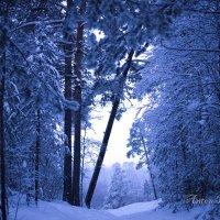 Вечерний лес... :: Антон Понкратов