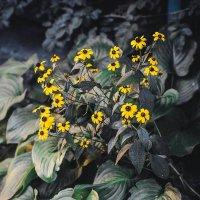 Flowers :: Алексей Бачурский