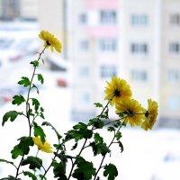 Еще одно зимнее воскресенье :: Виктор Коршунов